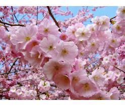 Su pavasariu visus!!!
